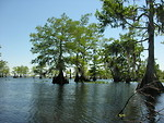Blue Cypress Lake portfolio